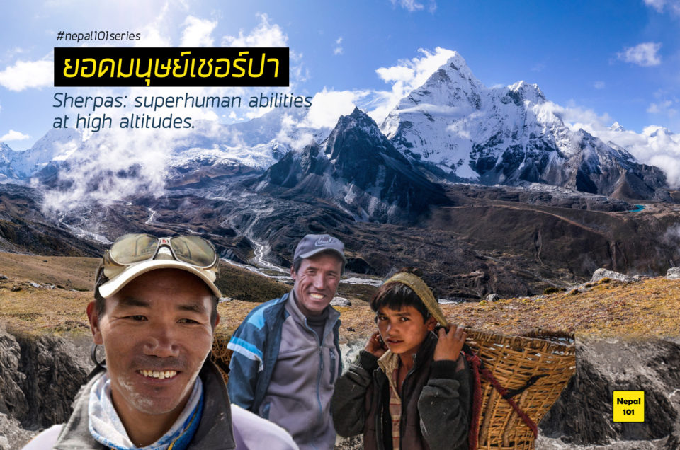 ยอดมนุษย์เชอร์ปา – Sherpas' apparent superhuman abilities at high altitudes.